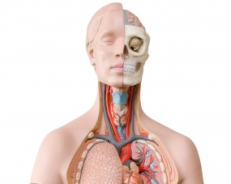 Anatomy Medical PG Questions